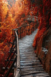 Autumn Leaves pathway