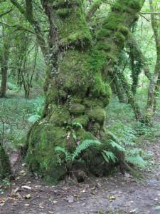 Green Man Tree
