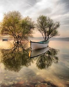 Boat, lake, tree