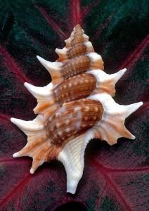 Shell on Leaf