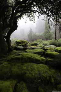 Moss boulder tree landscape