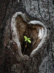 Tree Heart Leafbud